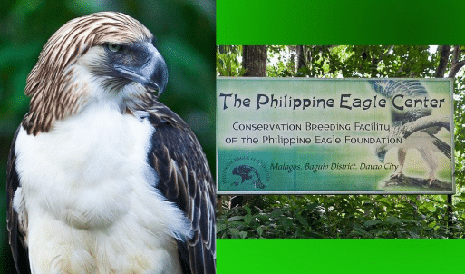 Philippine Eagle Center Davao - Davao Rental Tour Package