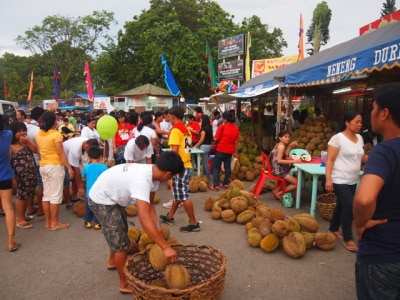 Durian Harvest in Davao