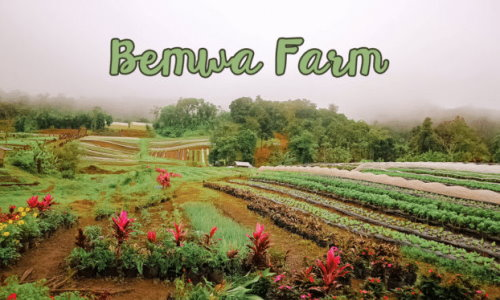 Bemwa Farm, BUDA, Marilog District, Davao City