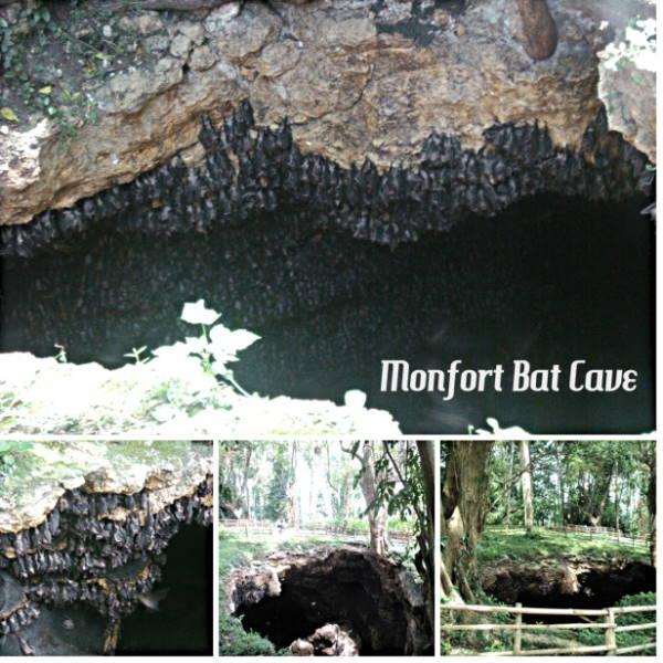 Monfort Bat Sanctuary in Samal Island