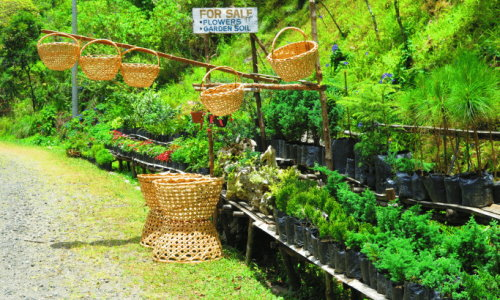 Plants For Sale in Davao City